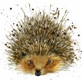 Hedgehog illustration with splash watercolor textured background — Stock Photo