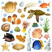 Exotic Fish, coral reef, algae, unusual sea fauna, sea shells, anemones and decoration marine theme. underwater world set. watercolor illustration for children — Stock Photo