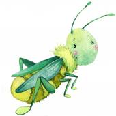 Cartoon insect grasshopper watercolor illustration. isolated on white background. — Stock Photo