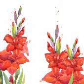 Gladiolus flower watercolor background. Summer garden flowers watercolor illustration — Stock Photo