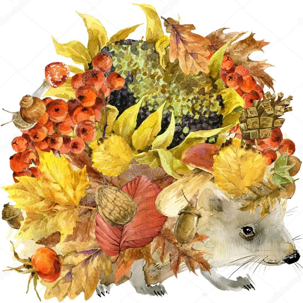Белка осень