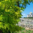 Acacia tree and St Vladimirs Cathedral — Stock Photo #78937118