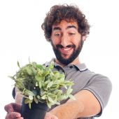 Young crazy man with a plant — Stock Photo
