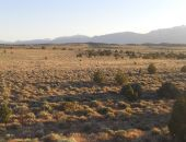 Dry field — Stock Photo