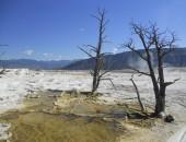Yellowstone trees — Stock Photo