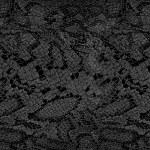 Snake skin texture — Stock Photo #67608801