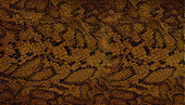 Snake skin texture — Stock Photo