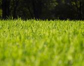 Concepto de hierba verde — Foto de Stock