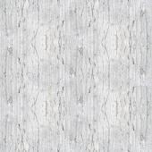 White trunk texture — Stock Photo