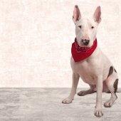 White dog on cement — ストック写真