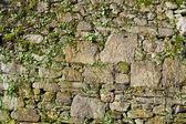 Moss stone wall texture — Stock Photo