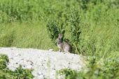 Vigilant rabbit — Stock Photo