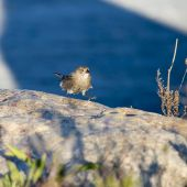 Sparrow on the move — Stock Photo
