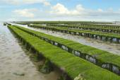 Oyster farm at low tide, Grandcamp-Maisy, France. — Stock Photo