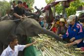 People feed baby elephant at the Elephant Buffet in Surin, Thailand. — Stockfoto