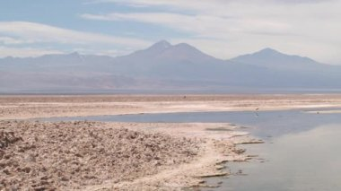 Flamingos at the salt lake in Atacama desert, Chile. — Video Stock