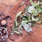 Herbal linden tea on the tree bark — Stock Photo #63664477