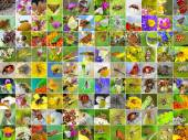 Insects. A collage of photos of insects found in Siberia — Stock Photo