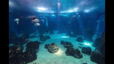 Fishes in Lisbon Oceanarium, Portugal timelapse — 图库视频影像