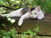 Kot na nagrobek — Zdjęcie stockowe