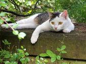 Cat on a gravestone — Stock Photo