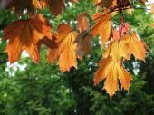 Kolorowych liści jesienią — Zdjęcie stockowe