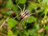 Funnel Spider — Stock Photo