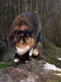 Tortoiseshell cat near tree — Stock Photo