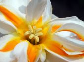 Yellow and white flower — Stock Photo