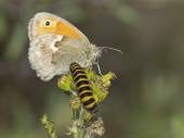 Butterfly and caterpillar on plant — Stock Photo