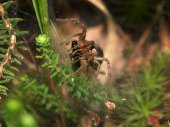 Spider and spiderweb on grass — Stock Photo