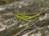 Close up of Grasshopper on log — Stock Photo