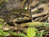 Green frog sitting on plants — Stock Photo