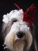 Köpek giyinmiş — Stok fotoğraf