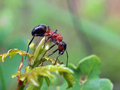 Ant on a green plant — Stock Photo