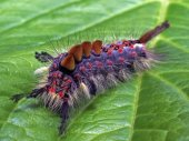 Macro close caterpillar — Stock Photo