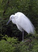 White heron in forest — Stock Photo