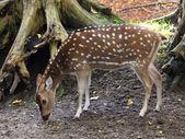 Deer near tree — Stock Photo