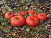 Red Pumpkins on leaves outdoors — Stock Photo