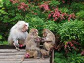 Baboons near bushes — Stock Photo