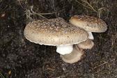 Close up of Fungi — Stock Photo