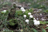 Fungi on the moss — Stock Photo