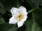 Close up of White flower — Stock Photo