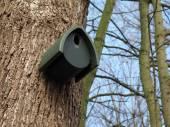 Ptáci dům na stromě — Stock fotografie