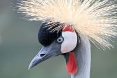 Crane bird — Zdjęcie stockowe