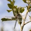 Dragonfly near tree branch — Stock Photo #65669689