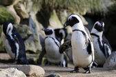 Cute Pinguins outdoors — Stock Photo