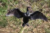 Cormorant bird on the tree — Stock Photo