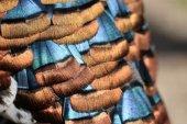 Meleagris ocellata feathers — Stock Photo