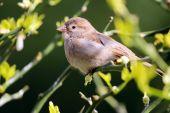 Cute sparrow on tree — Stock Photo